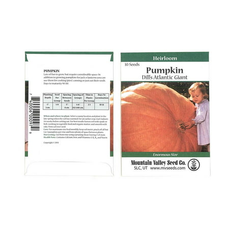 Pumpkin Garden Seeds - Dills Atlantic Giant Variety - 10 Seed Packet - Non-GMO, Heirloom Pumpkins - Medium Orange - Vegetable Gardening Seed