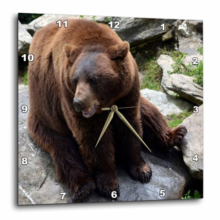 Carolina Clock (3dRose Brown Bear North Carolina Bear, Wall Clock, 10 by 10-inch)