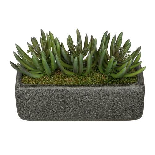 House of Silk Flowers Inc. Artificial Green Senecio Plant in Decorative Vase