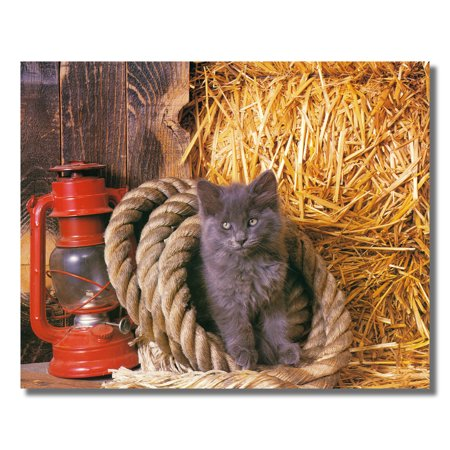 Kitten Cat in Rope w/ Straw and Lantern Photo Wall Picture 8x10 Art Print