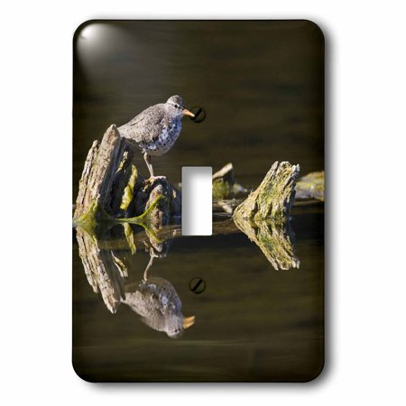 3dRose British Columbia, Spotted Sandpiper, Deadwood-CN02 LDI0067 - Larry Ditto, 2 Plug Outlet