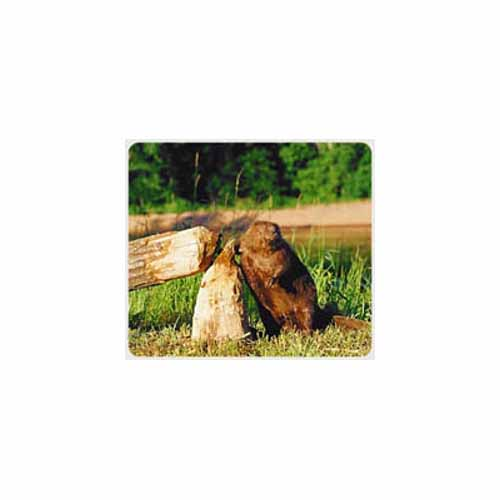 Beaver Mouse Pad BE3