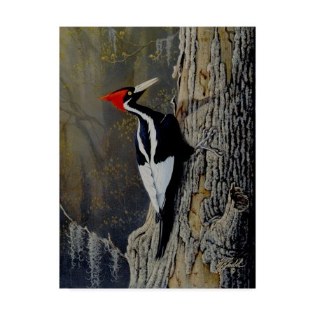 Trademark Fine Art 'Ivory Bill' Canvas Art by Wilhelm Goebel