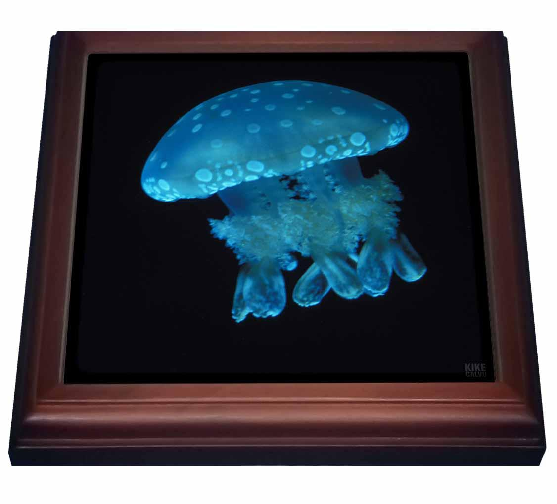 3dRose Lagoon jellyfish, Mastigias, Trivet with Ceramic Tile, 8 by 8-inch