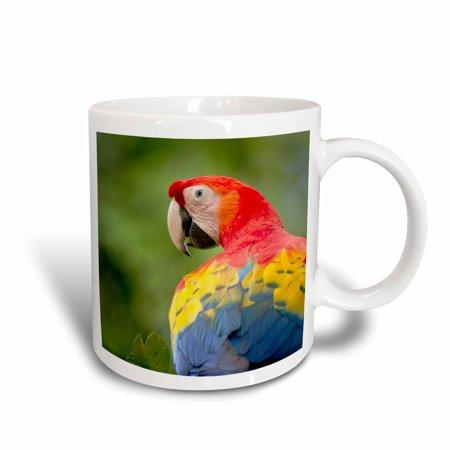 3dRose Scarlet macaw bird, rainforest, Costa Rica - SA22 RSP0031 - Rob Sheppard, Ceramic Mug,