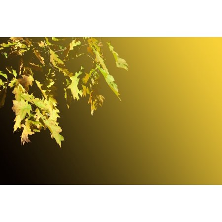 LAMINATED POSTER Autumn Leaves Decoration Oak Leaves Emerge Oak Poster Print 24 x 36