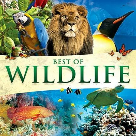 Best Of Wildlife / Various (Best Wildlife Photos Of All Time)