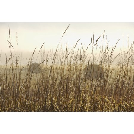 Bales Of Hay In A Field In The Fog Thunder Bay Ontario Canada Canvas Art   Susan Dykstra  Design Pics  38 X 24