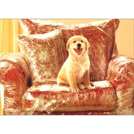 New Puppy Announcements (Avanti Press Puppy in Plastic Covered Chair Dog New Pet Card)
