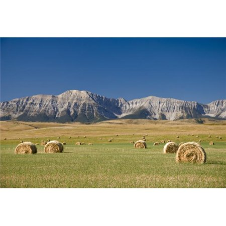 Posterazzi DPI1837077LARGE Field of Hay Bales Alberta Canada Poster Print, Large - 34 x 22 - image 1 of 1