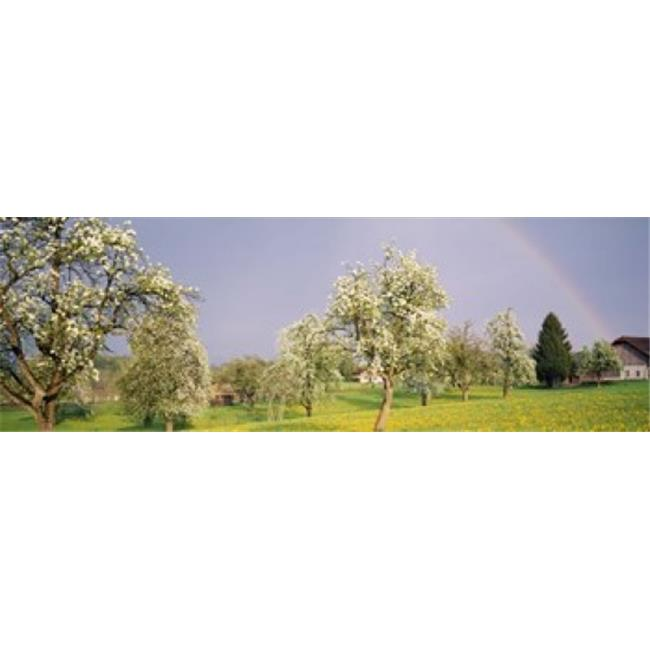 Pear trees in a field - Pyrus communis  Aargau  Switzerland Poster Print by  - 36 x 12 - image 1 of 1