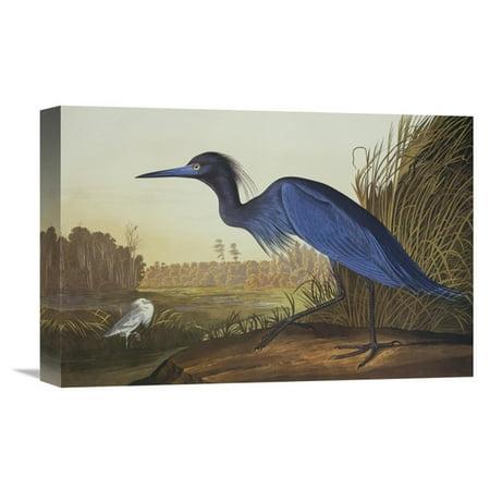 Global Gallery Blue Crane or Heron Wall Art