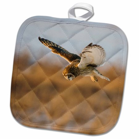 3dRose Short-eared Owl in flight, Prairie Ridge SNA, Marion, Illinois, USA. - Pot Holder, 8 by 8-inch