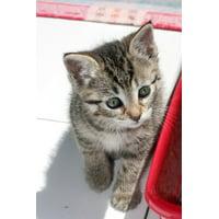 LAMINATED POSTER Encourages Kitten Cat Face Cat Gata Pet Animals Poster Print 24 x 36