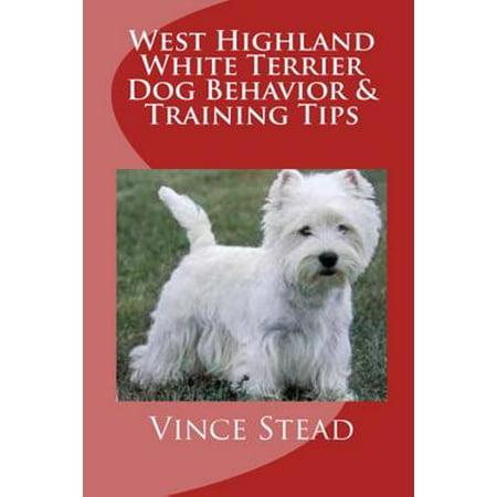 - West Highland White Terrier Dog Behavior & Training Tips