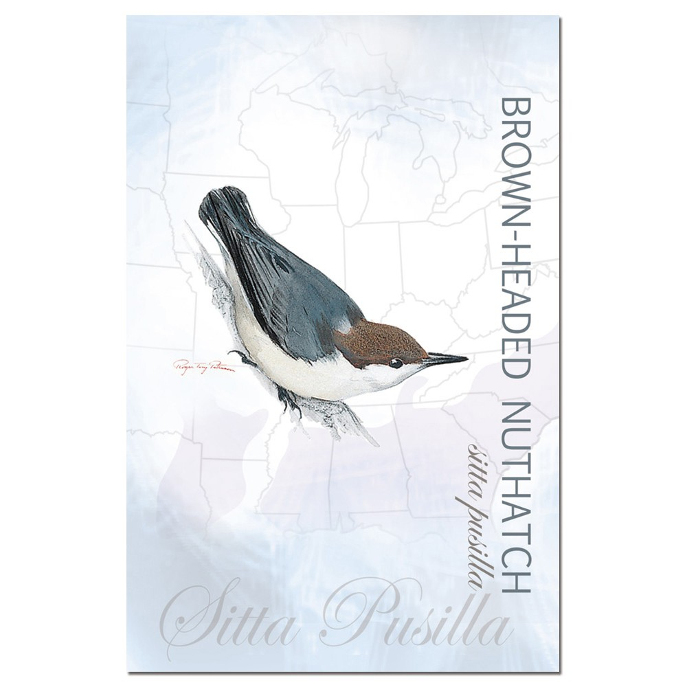 Tree-Free Greetings Brown-headed Nuthatch econotes Blank Note Cards-FS66363