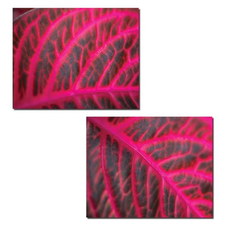 Pink Leaf | Gorgeous Pink Veined Leaf Photograph Print Set; Two 14x11 Poster Prints