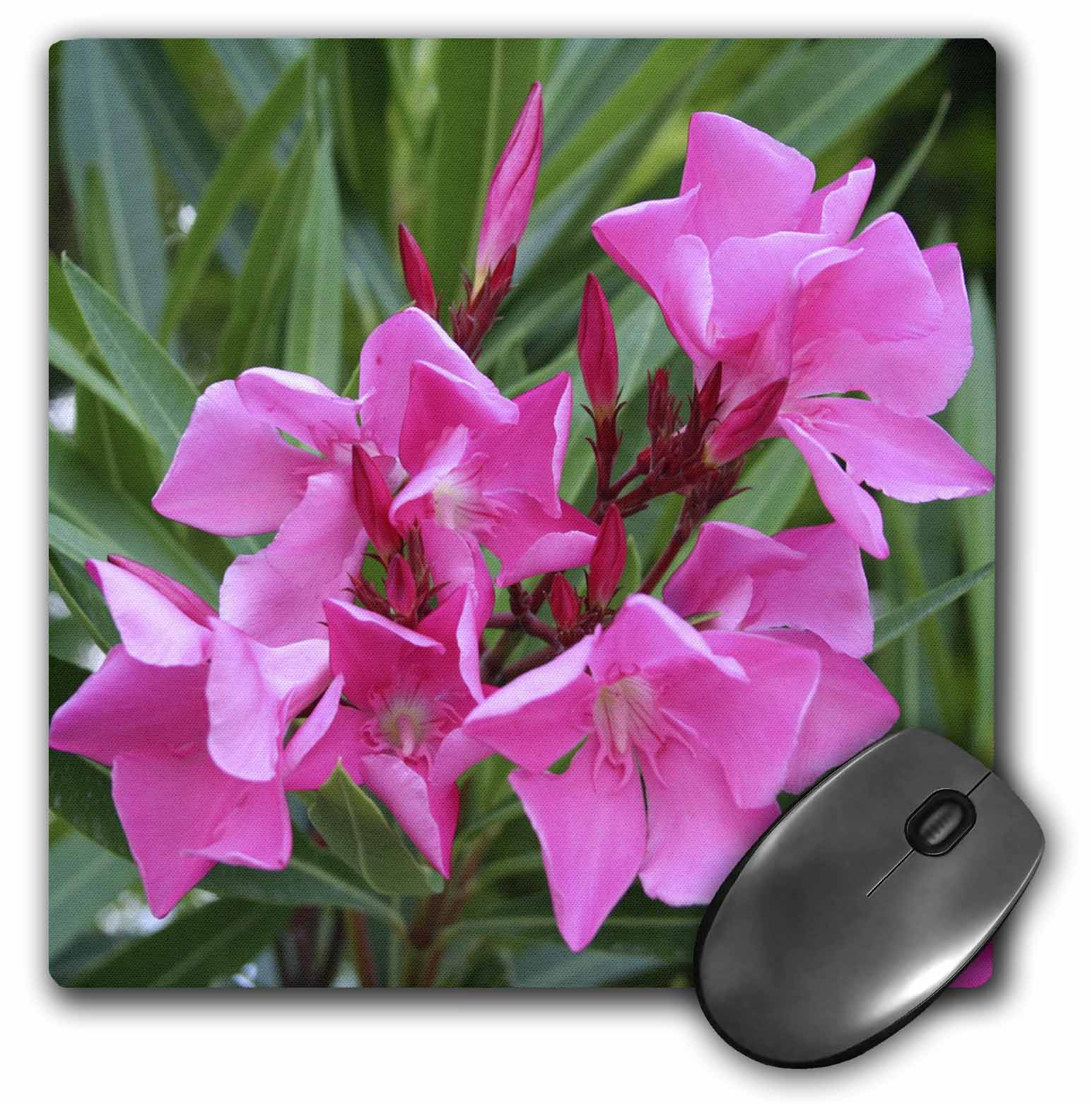 3dRose Oleander Pink pink, flower, tree, oleander, blossom, tropical plant, buds, Mouse Pad, 8 by 8 inches by 3dRose