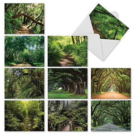 'M6467OCB NATURE TRAILS' 10 Assorted All Occasions Greeting Cards Featuring Meandering Paths and Trails Through Lush Forests and Overhanging Trees with Envelopes by The Best Card (Best Nature Trails In Georgia)
