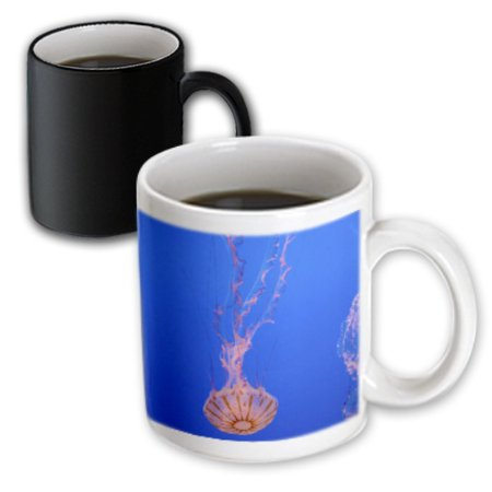 3dRose Jellyfish, Monterey Bay Aquarium, California - US05 DFR0360 - David R. Frazier, Magic Transforming Mug, 11oz