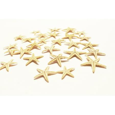 100 Small Starfish - Philippine Tan Flat Sea Stars (1