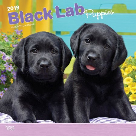 2019 Lab Retriever Black Puppies Wall Calendar, by BrownTrout