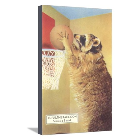Raccoon Playing Basketball Stretched Canvas Print Wall Art ()