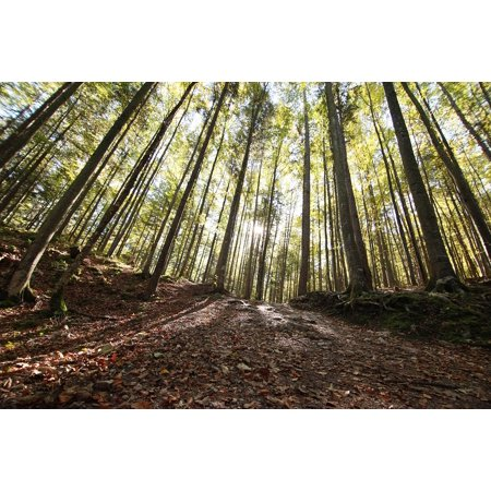 - Canvas Print Tree Wood Park Nature Forest Timber Lumber Stretched Canvas 10 x 14
