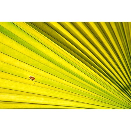 Laminated Poster Plant Palm Leaf Palm Leaves Green Palm Trees Poster Print 24 x - Palm Tree Leaf Balloons