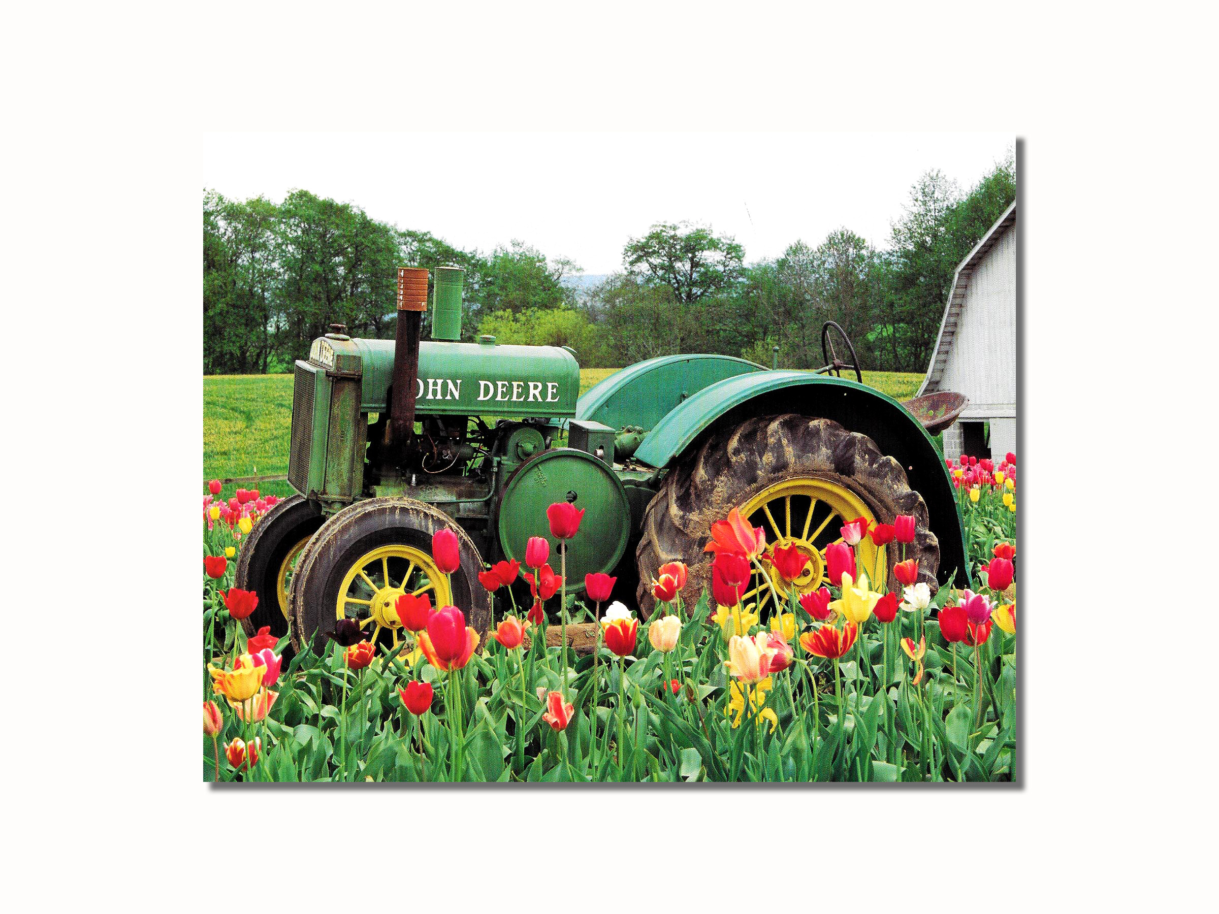 Old John Deere Tractor In Tulips Near Barn Wall Picture 8x10 Art