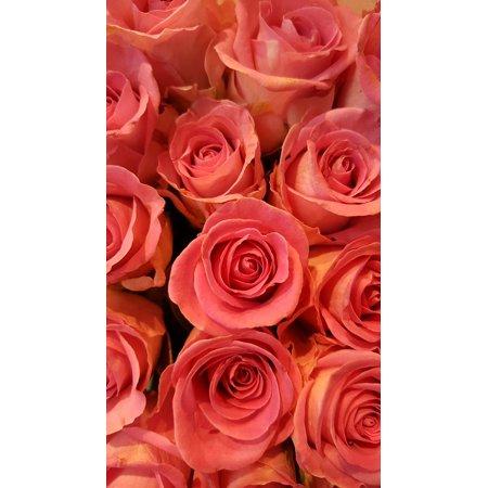 LAMINATED POSTER Rose Bloom Rose Pink Bloom Pink Roses Blossom Poster Print 24 x 36