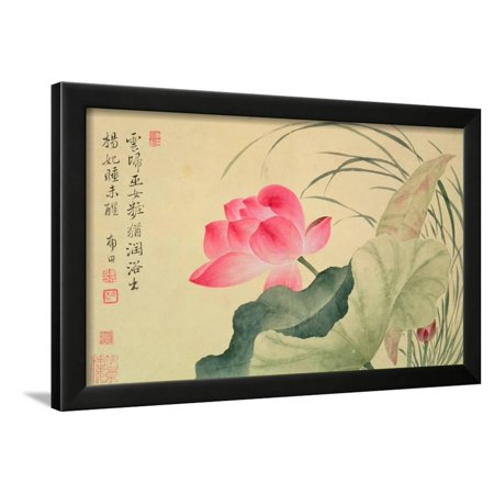 Lotus Flower By Yun Shou Ping 1633 90 From An Album Of Flowers