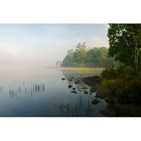 Shoreline trees and grasses along Nina Moose Lake fog Boundary Waters Canoe Area Wilderness Minnesota USA Poster Print (8 x