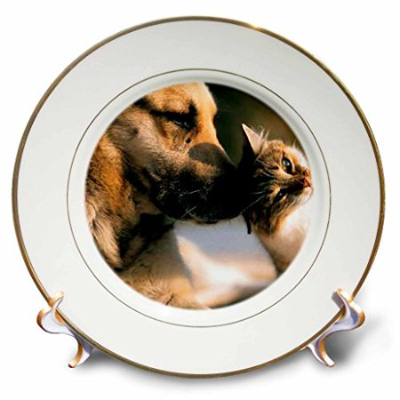 3dRose Cats and Dogs, Porcelain Plate, 8-inch (Plate Dog Rose)