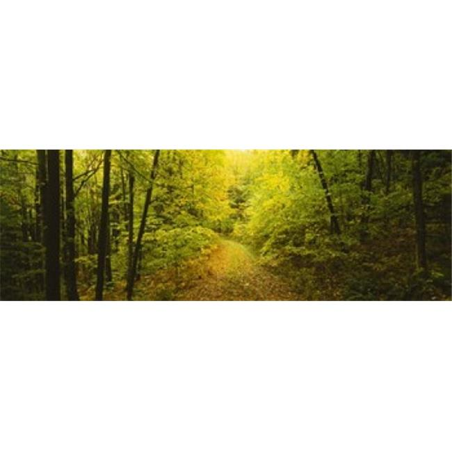 Panoramic Images PPI75954L Dirt road passing through a forest  Vermont  USA Poster Print by Panoramic Images - 36 x 12 - image 1 of 1