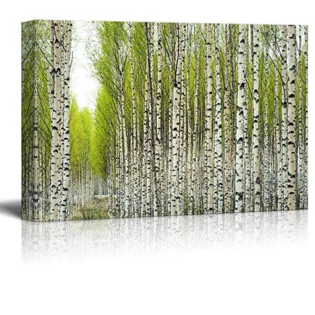 """wall26 Canvas Prints Wall Art - Birch Trees with Fresh Green Leaves in Spring 