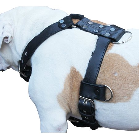 13 Harness Chest (Genuine Leather Dog Harness Large 28'-35' Chest, 1.3' Wide Adjustable Straps )