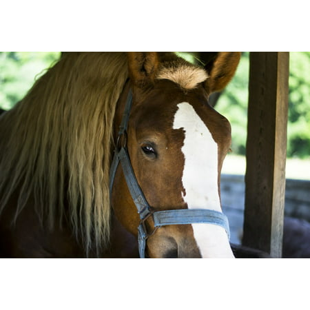 Canvas Print Equestrian Stable Equine Farm Mane Animal Horse Stretched Canvas 10 x 14