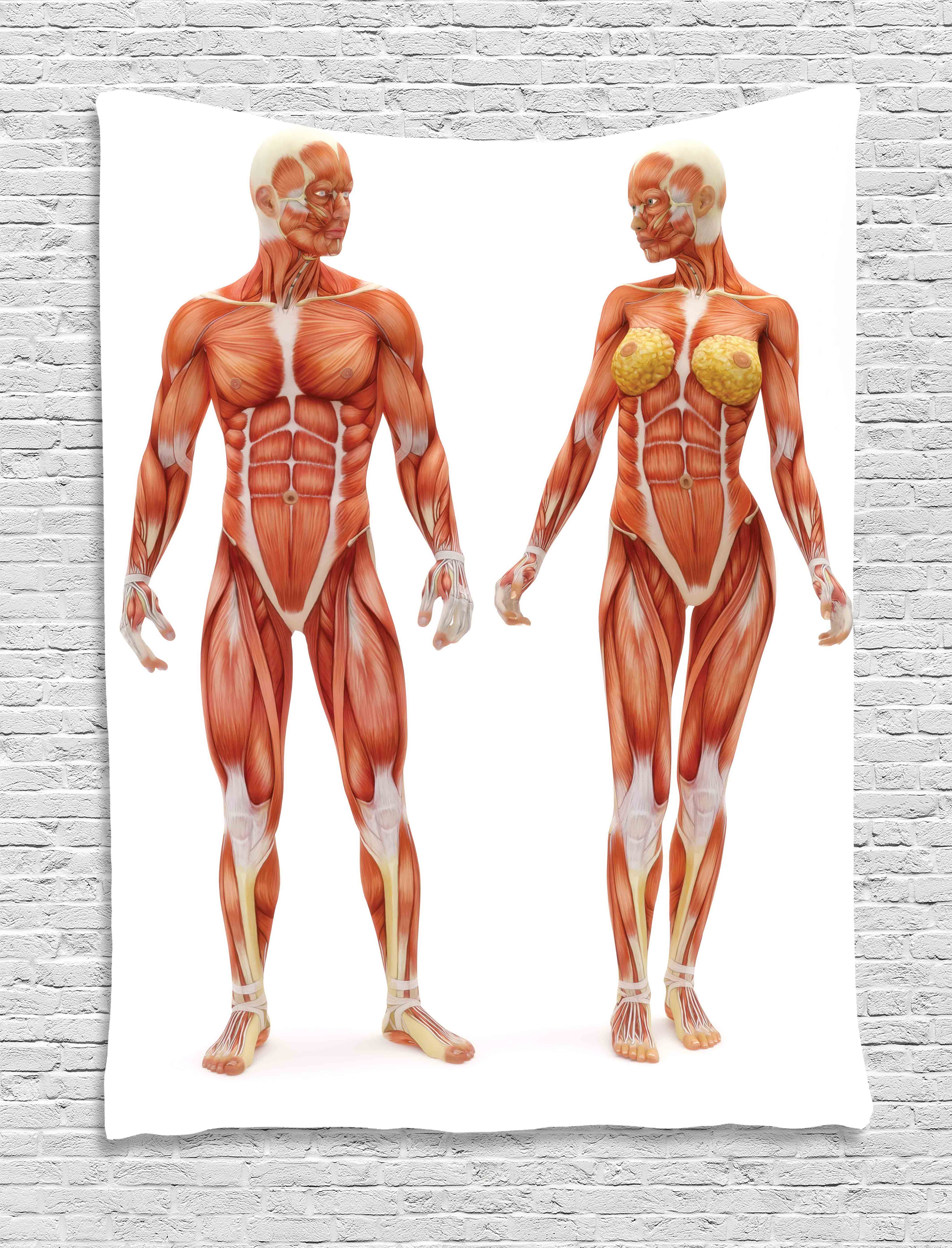Human Anatomy Tapestry Male And Female Bodies With Inner Mass Build