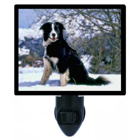 Night Light - Photo Light - Border Collie - Dog Border Collie Dog Photo