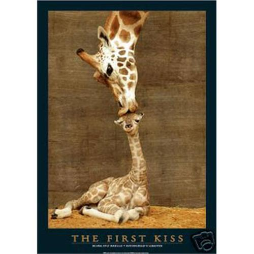 Hot Stuff Enterprise 4111-24x36-AN Giraffe The First Kiss Poster