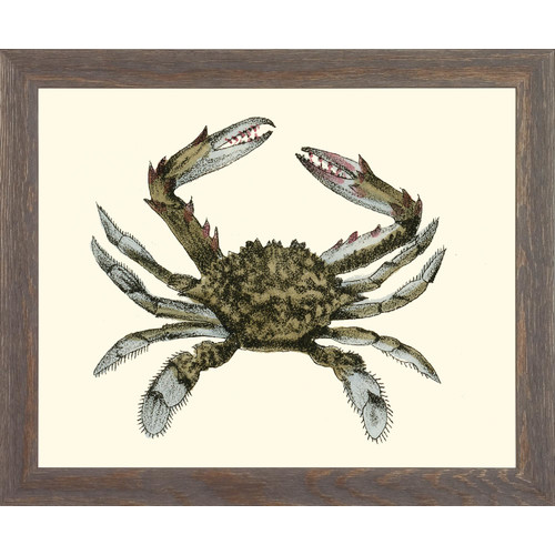 Art Virtuoso Blue Crabs by John Torrey Framed Painting Print