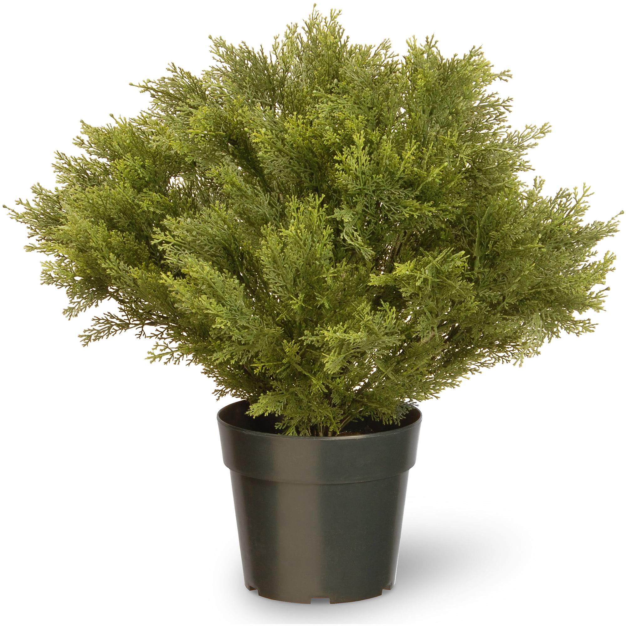"National Tree 24"" Globe Juniper with Green Pot"