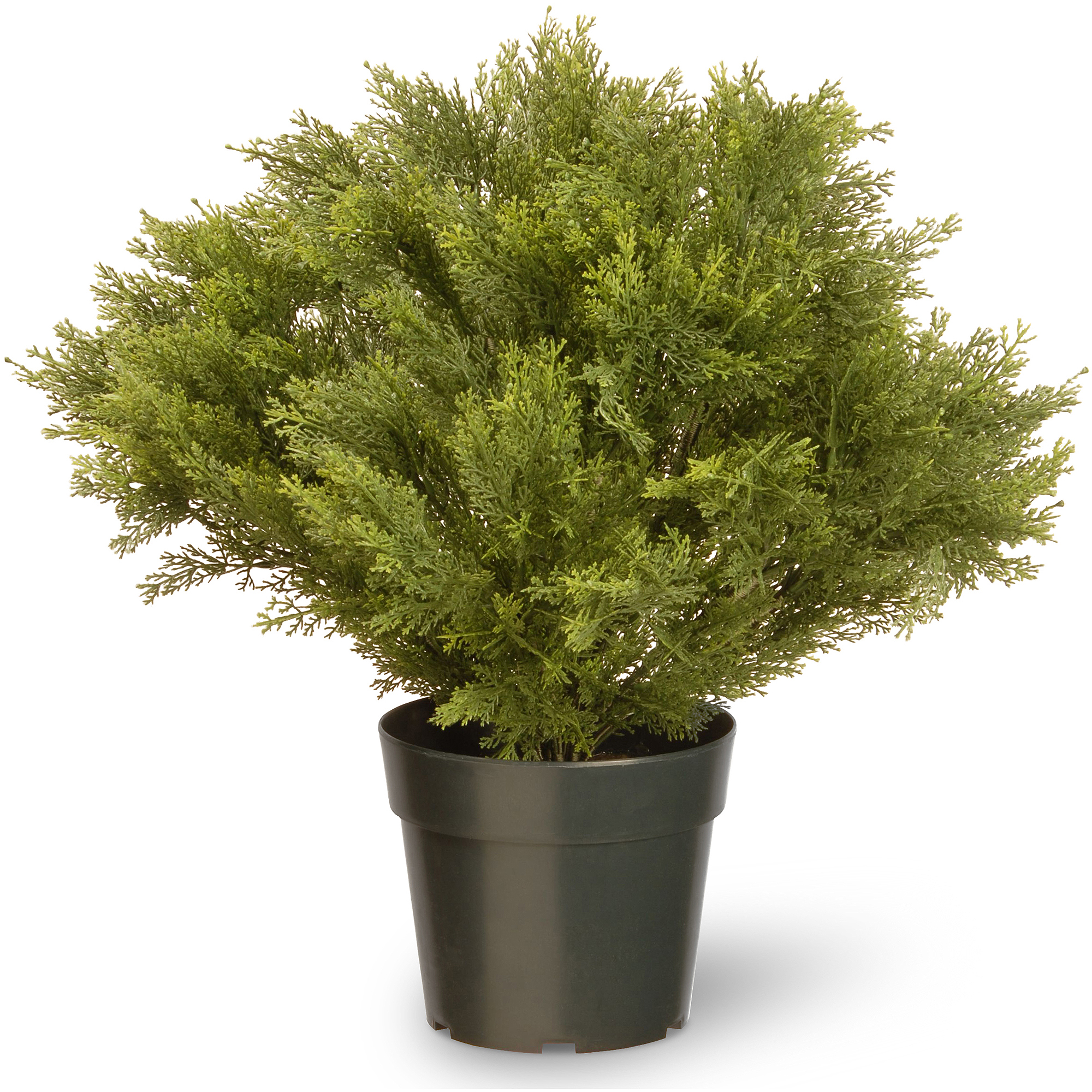 "National Tree 24"" Globe Juniper with Green Pot"