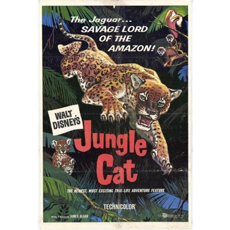 Posterazzi MOVIH8086 Jungle Cat Movie Poster - 27 x 40 in. - image 1 of 1