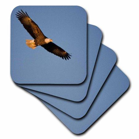 3dRose Bald Eagle in flight over Mississippi River, Soft Coasters, set of 8