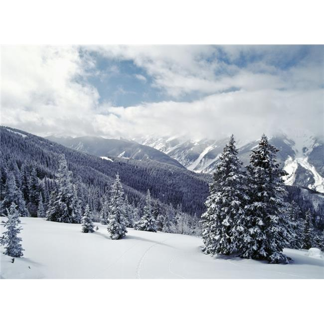 Posterazzi DPI1891766 Snow Covered Pine Trees On Mountain Poster Print, 18 x 13 - image 1 of 1