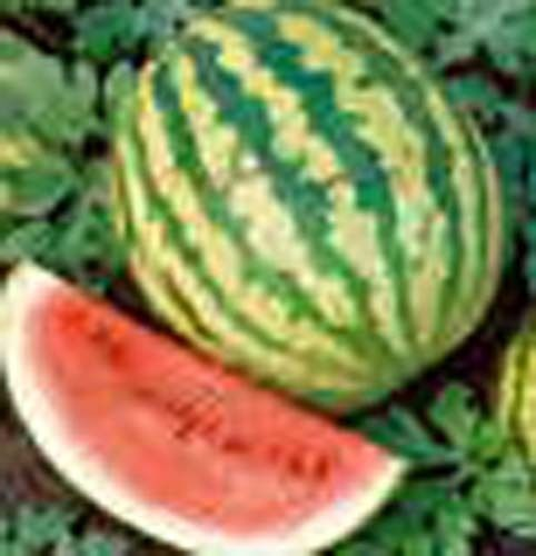 Crimson Sweet - Watermelon Crimson Sweet Great Heirloom Garden Vegetable 30 Seeds
