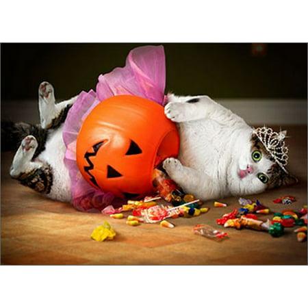 Avanti Press Princess Cat On Pumpkin Funny / Humorous Halloween - Funny Halloween Cat Pics