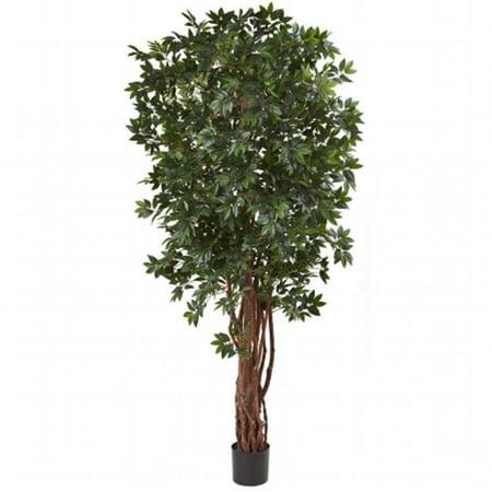 7.5 ft. Lychee Silk Tree